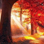 Autumn's True Colors and God's Sugar Coatings