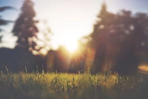 sunrisegrass